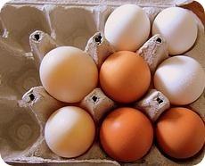 proteinas-animales